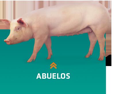 Criadores de cerdos de abuelos
