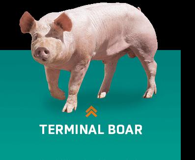 Terminal verrats
