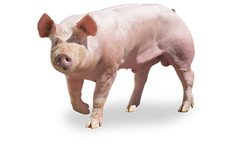 Excelium terminal boars